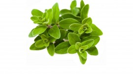 Marjoram Best Wallpaper