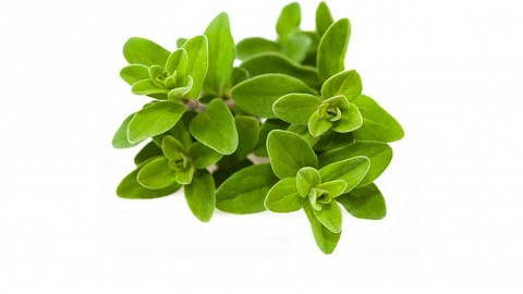 Marjoram wallpapers high quality