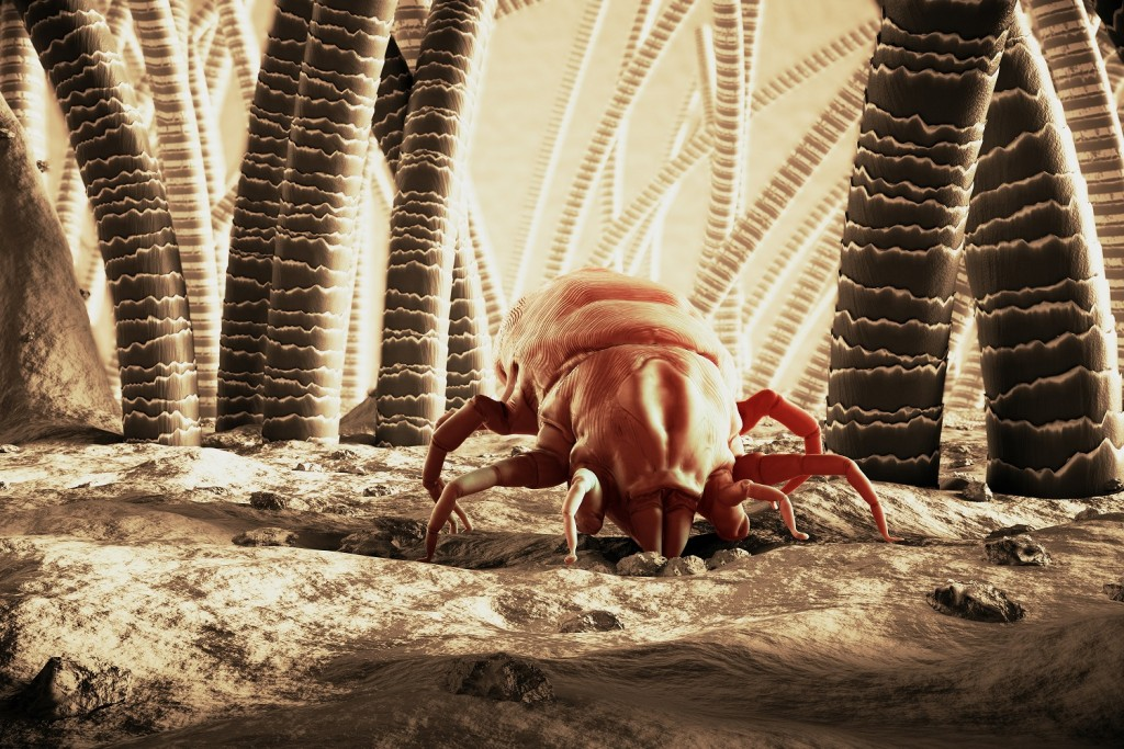Mites wallpapers HD