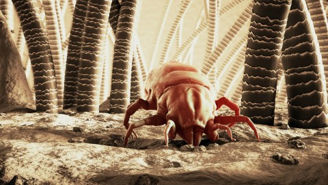 Mites wallpapers high quality