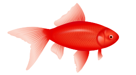 Red Fish Wallpaper Free