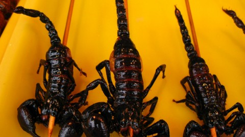 Scorpions Food wallpapers high quality