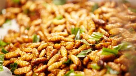 Silkworm Pupae wallpapers high quality