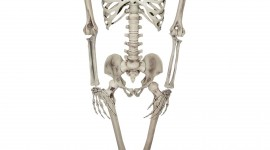 Skeleton Wallpaper Background