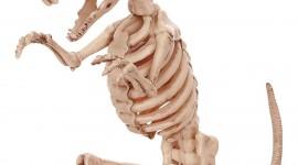 Skeleton Wallpaper Download