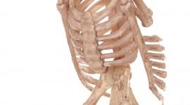 Skeleton Wallpaper Download Free