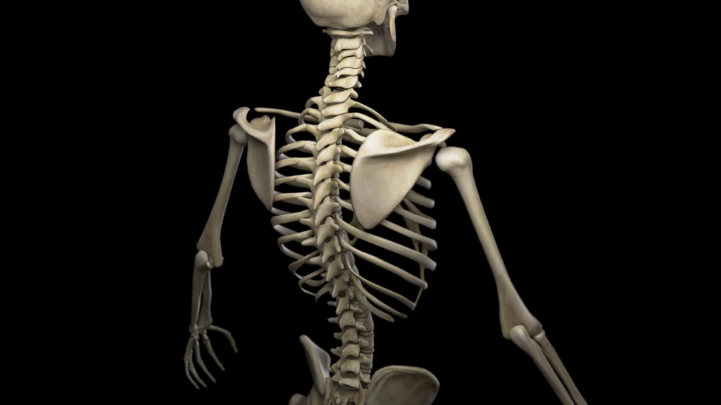 Skeleton wallpapers HD