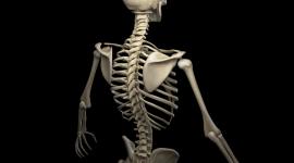 Skeleton Wallpaper For Desktop