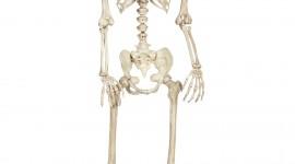 Skeleton Wallpaper For IPhone