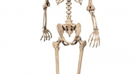 Skeleton Wallpaper For IPhone 6 Download