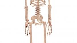Skeleton Wallpaper For Mobile