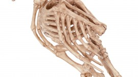 Skeleton Wallpaper Gallery