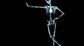 Skeleton Wallpaper HQ
