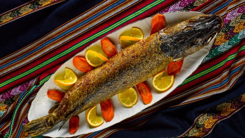 Stuffed Fish wallpapers high quality