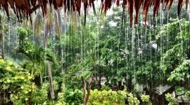 Summer Rain Photo Download