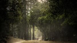Summer Rain Wallpaper Full HD