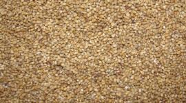 Wheat Porridge Desktop Wallpaper