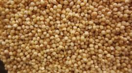 Wheat Porridge Wallpaper Background