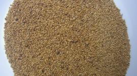 Wheat Porridge Wallpaper For Desktop