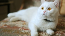 White Kitten Wallpaper 1080p