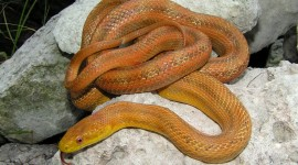 Yellow Snake Wallpaper Download Free
