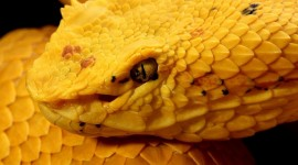Yellow Snake Wallpaper Gallery