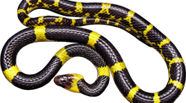 Yellow Snake Wallpaper High Definition