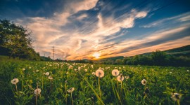 4K Field Wallpaper Download Free