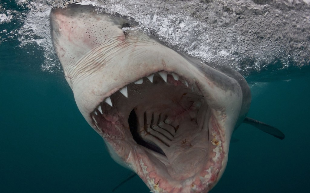 4K Shark's Mouth wallpapers HD