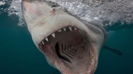 4K Shark's Mouth Best Wallpaper