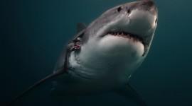 4K Shark's Mouth Photo