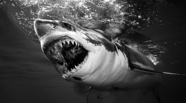 4K Shark's Mouth Photo Free