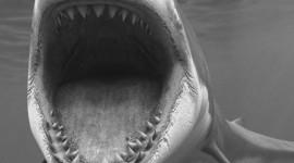 4K Shark's Mouth Wallpaper For Mobile