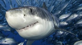 4K Shark's Mouth Wallpaper Free
