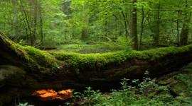 Bialowieza Forest Desktop Wallpaper HD