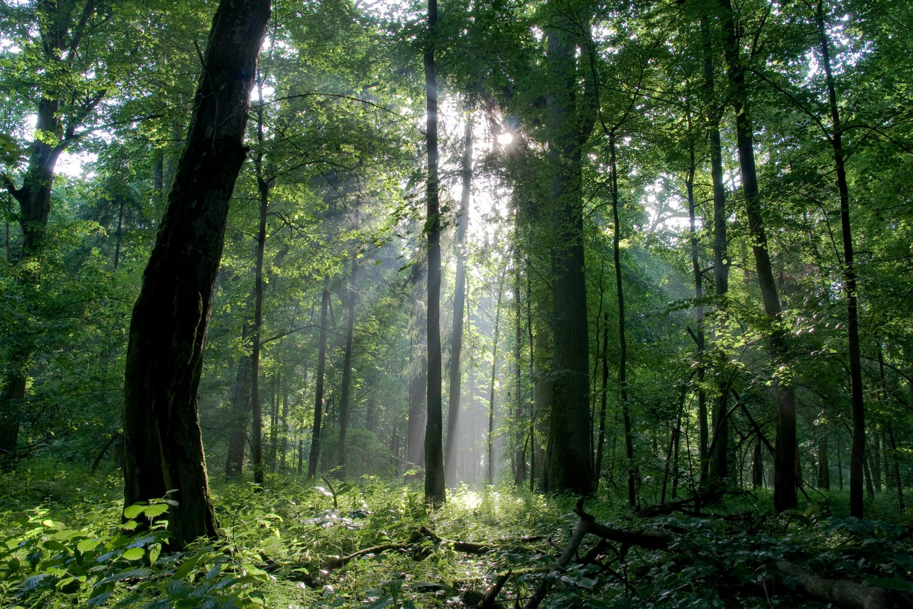 bialowieza forest wallpapers high quality download free