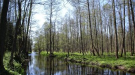 Bialowieza Forest Wallpaper Free