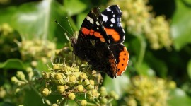 Butterfly Admiral Wallpaper 1080p