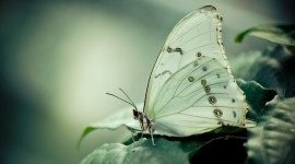 Cabbage Butterfly Best Wallpaper
