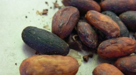 Cocoa Beans Wallpaper Background