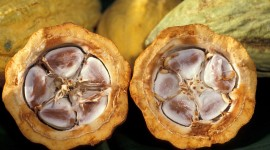 Cocoa Beans Wallpaper Download Free
