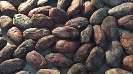 Cocoa Beans Wallpaper For IPhone