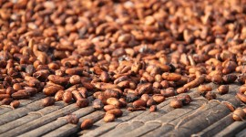 Cocoa Beans Wallpaper For PC