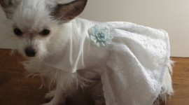 Dog Dresses Photo Free