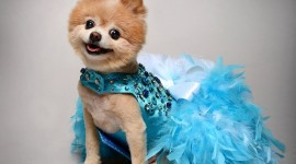 Dog Dresses Wallpaper