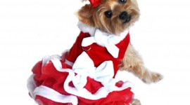 Dog Dresses Wallpaper For Android#2