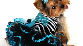 Dog Dresses Wallpaper For Mobile