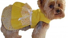 Dog Dresses Wallpaper For PC
