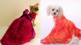 Dog Dresses Wallpaper Gallery