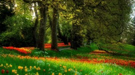 Glade Of Flowers Wallpaper Gallery